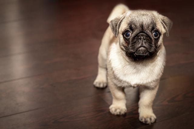 Pourquoi utiliser une litière pour chiens ?